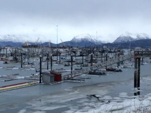 Winter 2020 around Homer Harbor